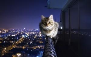 Ночь, кот, город